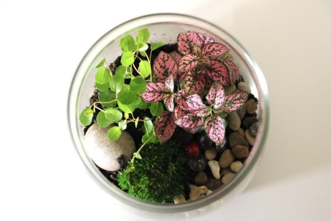 glass bowl terrarium
