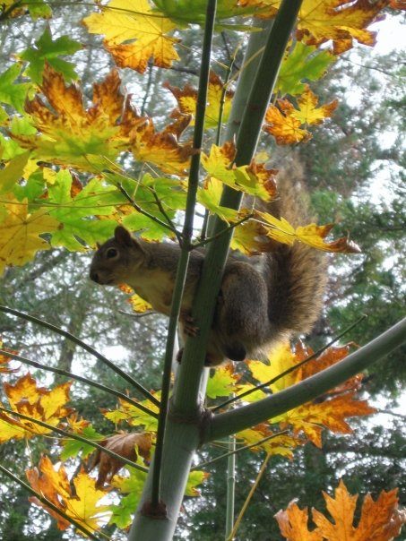 squirrel-fall-color-Anne-of-Green-Gardens