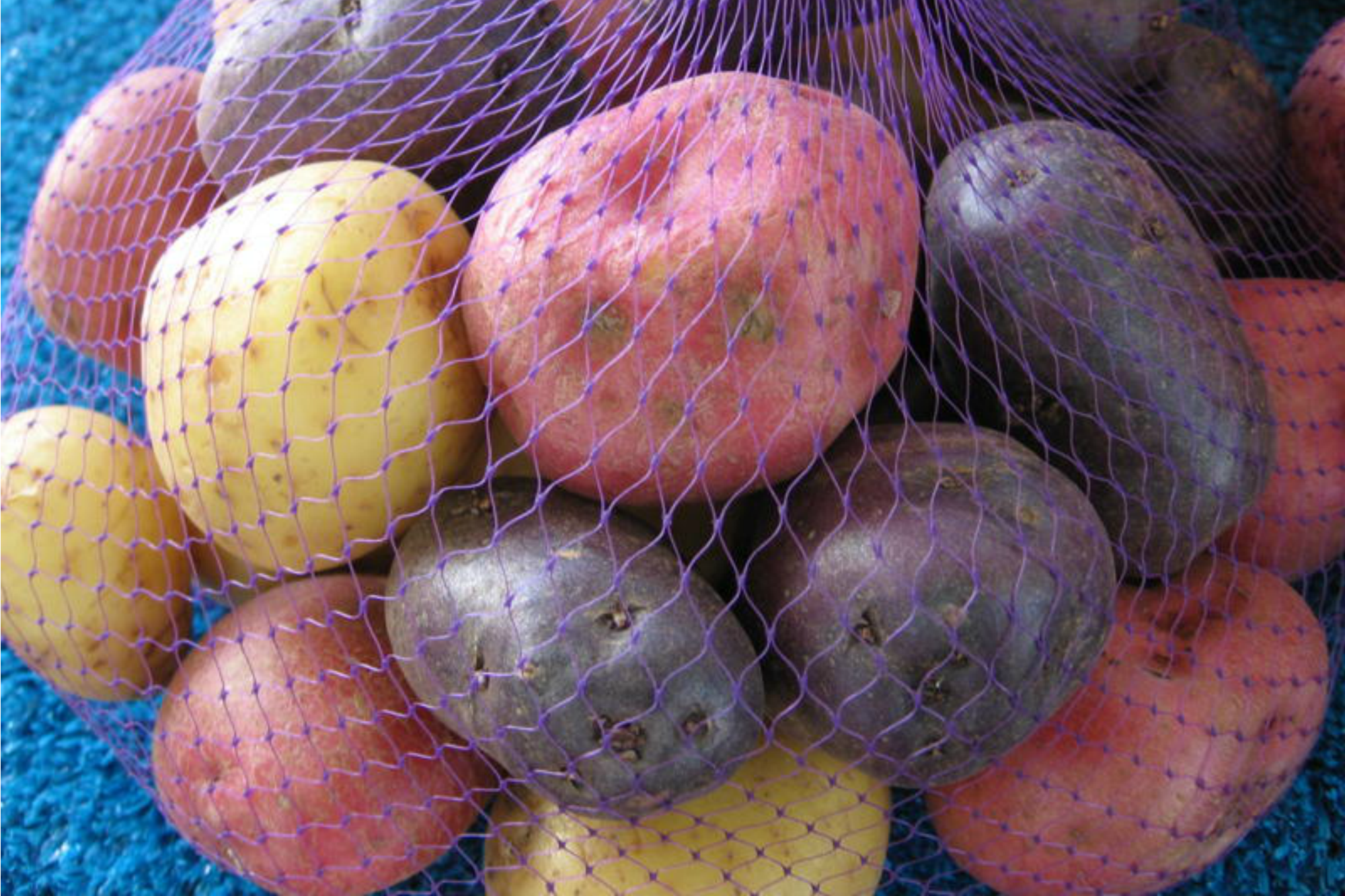colorful potatoes Anne of Green Gardens