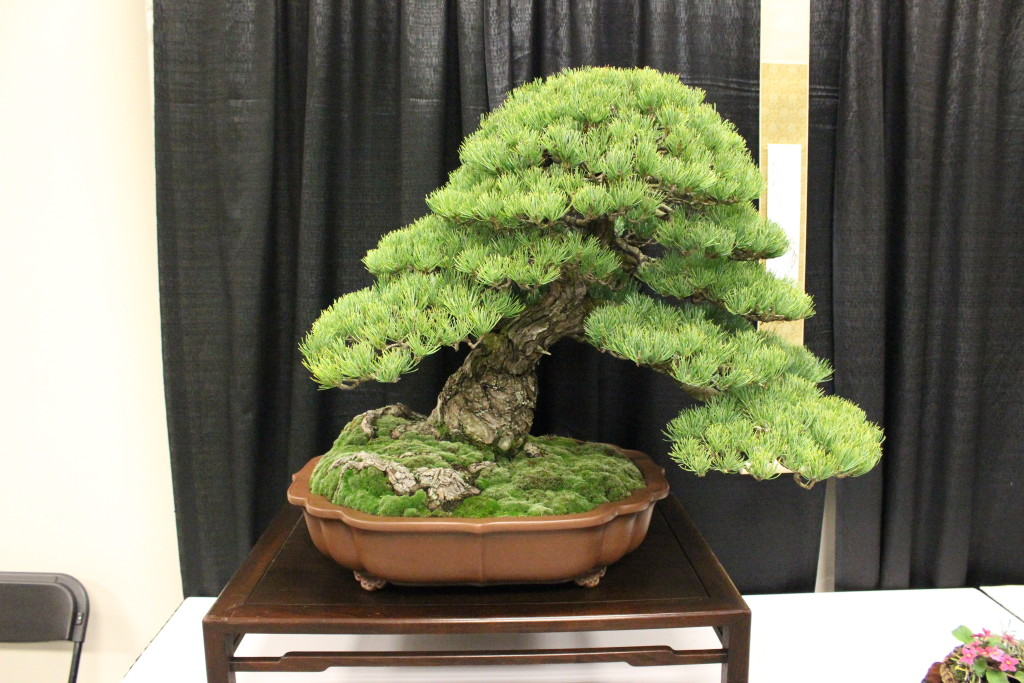 Bonsai is a form of gardening that is also an art. photo by Holly Guenther