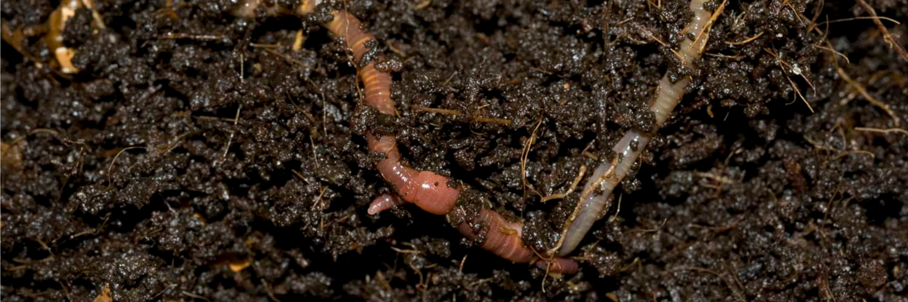 Banner-compost-worms