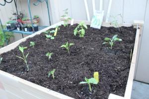Newly planted patio garden