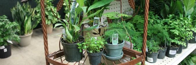 Houseplants-banner-Anne-of-Green-Gardens