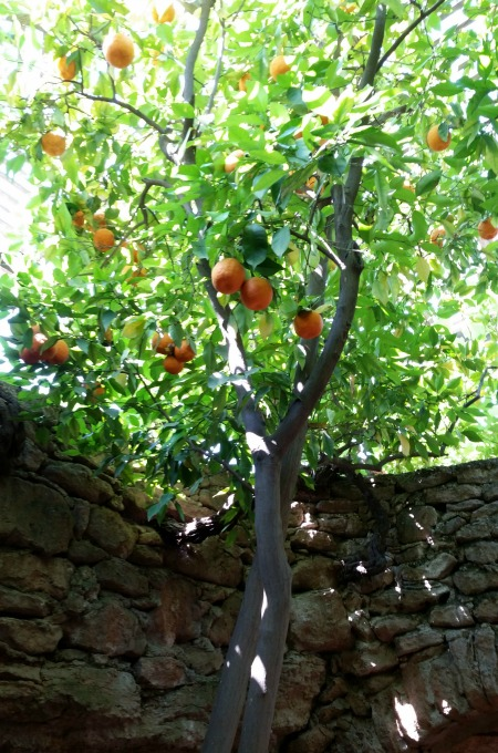 Fruit growing up out of the ground. [L. Won]