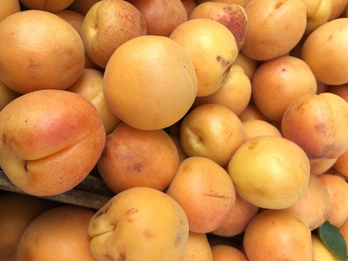 apricots-anne-of-green-gardens