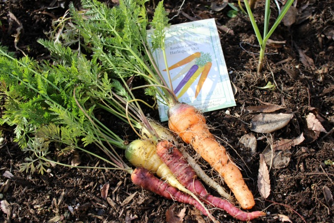colorful-carrots-renees garden